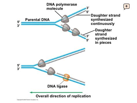 Protein Synthesis Diagram Labeled