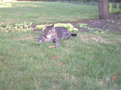 katzen entwurmen ab wann ab wann sollte die katze freigang bekommen