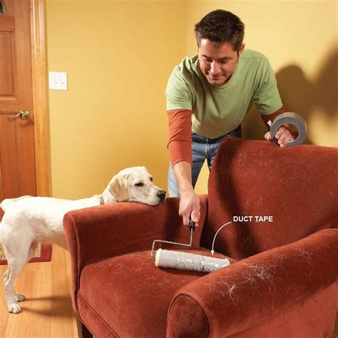remove dog hair from couch 17 best images about dog treats dog food foods toxic to