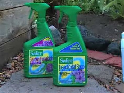 how to get gnats out of your house how to get rid of gnats on house plants howstuffworks