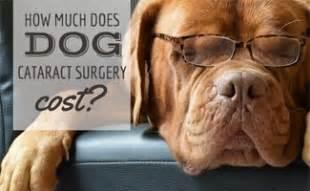 how much does cataract surgery cost hyperkeratosis in dogs does your caninejournal