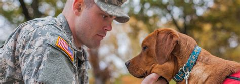 veteran dogs puppy jake foundation service dogs for veterans