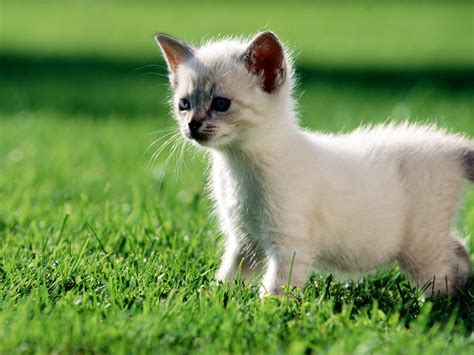 Tapety z kotami: 105 Cute Cats Wallpapers 1600 X 1200