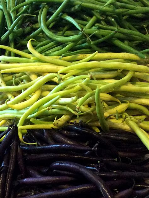 Recolte Haricot Vert by Haricot Vert Mangetout Coco Beurre Jaime Jardiner