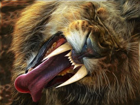 saberteeth  lion cats animals background wallpapers
