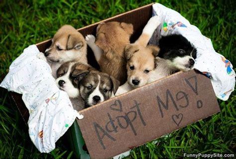 adopting puppies adopt us funnypuppysite