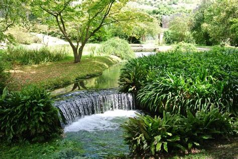 ruscello in giardino giardino di ninfa ruscelli di irrigazione foto di