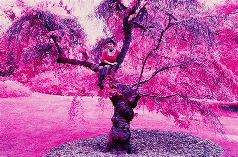 infrared color file color infrared sfoseayyz tree jpg
