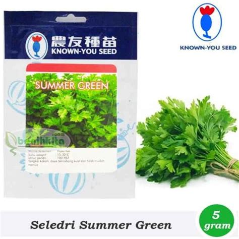 Benih Seledri Summer jual benih seledri summer green you seed