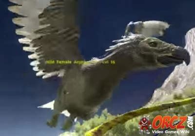 ark survival evolved: argentavis orcz.com, the video