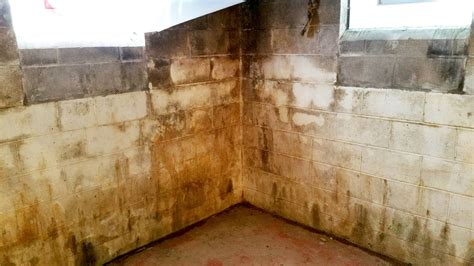 what does mold look like in a basement why is not the answer for mold remediation all