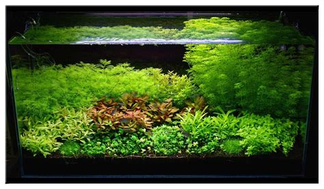 substrate aquascape aquascape substrate 28 images pesona aquascape tanaman