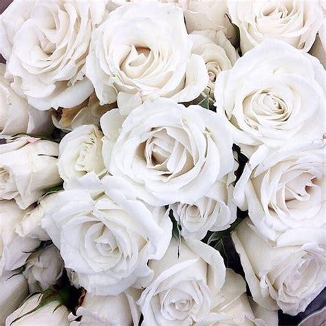 wallpaper flower white rose love tumblr image 2570379 by lady d on favim com