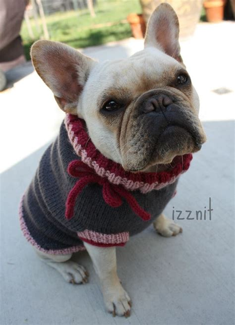 knitting pattern sweater french bulldog french bulldog in a knit sweater who s a cutie who s a