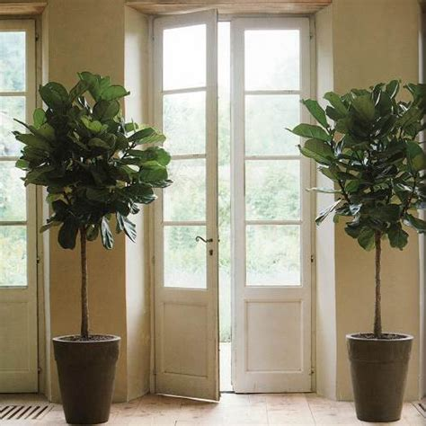 house plant ideas large plants in the house ideas designs and more