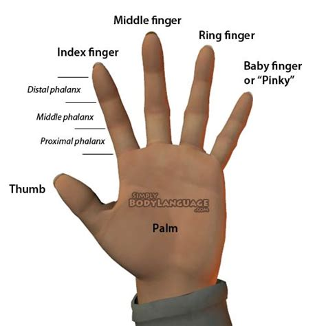 Thumb And Fingers emergency learning