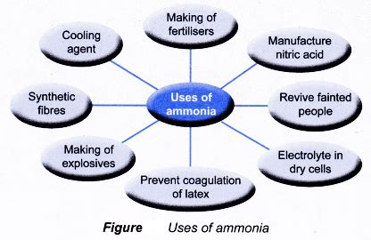 uses of ammonia in our daily life a plus topper