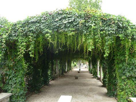 Ordinaire Tonnelle De Jardin En Bois #4: vigne-vierge-pergola.jpg