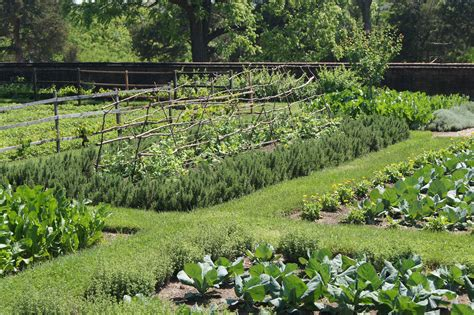 Planning A Vegetable Garden Blooming Oasis Picture Of Vegetable Garden