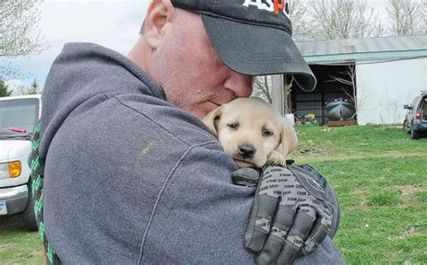 aspca puppy mills 48 yellow labradors safe after 3rd puppy mill bust in 1 month