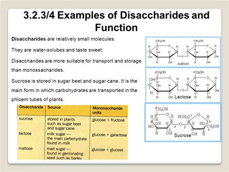 8 functions of carbohydrates topic 3 2 carbohydrates lipids and proteins ppt