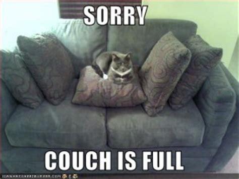 love on the sofa i can has cheezburger roy o rama