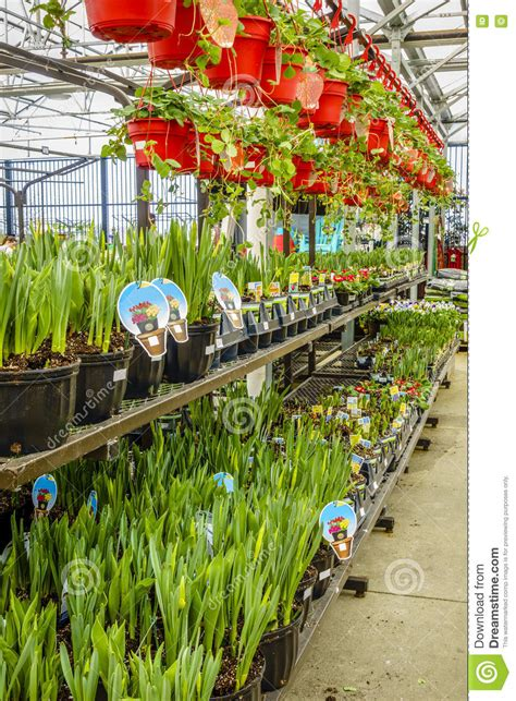 home  garden store  spring stock image image