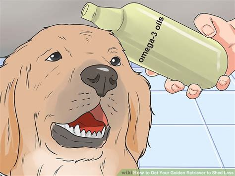 how often should i give my golden retriever a bath how to get your golden retriever to shed less 12 steps