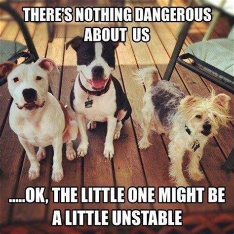 Pitbull Puppy Meme - 120 best images about pit bull memes on pinterest