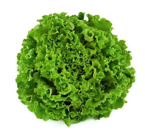 vegetables greens paleo aip food 6 vegetables primal health and nutrition