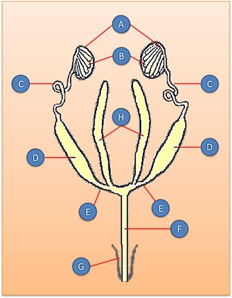 At Aglance Sistem Reproduksi ita widiati makalah arhtropoda insecta