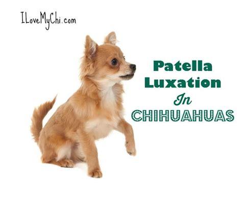luxating patella in dogs kneecap dislocation kneecap arthritis elsavadorla