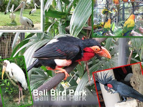 Tiket Bali Bird Park Dewasa info tiket taman burung bird park bali newhairstylesformen2014