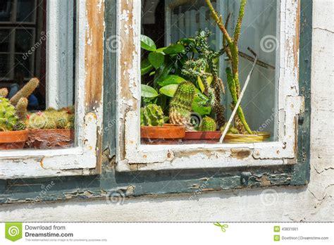 Window Sill Displays Cactii On Display On A Window Sill Stock Photo Image