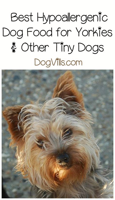 food for yorkies best hypoallergenic food for yorkies