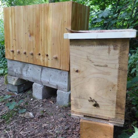 Golden Top Bar Hive by Modified Golden Hive