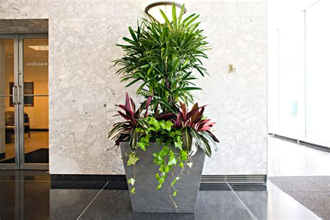office plant services  phillips interior plants