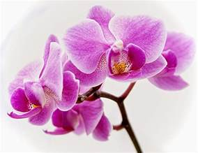 orchid flowers shijie is unstoppable august 2014