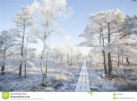 frosty forest royalty free stock frosty morning at forest landscape with the frozen plants