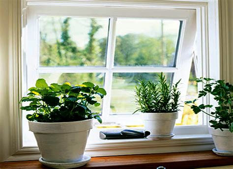 indoor window garden indoor window garden 28 images bringing houseplants
