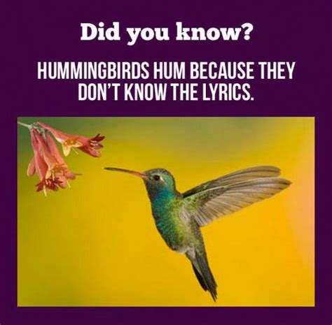 why hummingbird hum pictures photos and images for