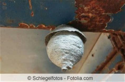 Beseitigung Wespennestern by Wespennest Unter Dem Dach Dachboden Wie Entfernen