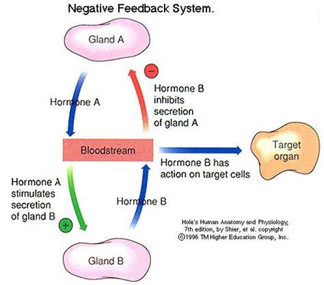 endocrine system pptx.pptx on emaze
