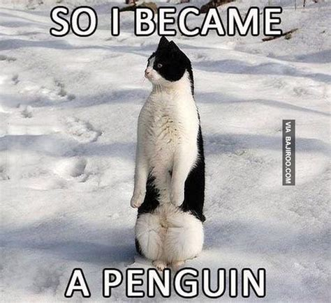 Penguin Meme - 24 memes that prove penguins are the funniest animals on