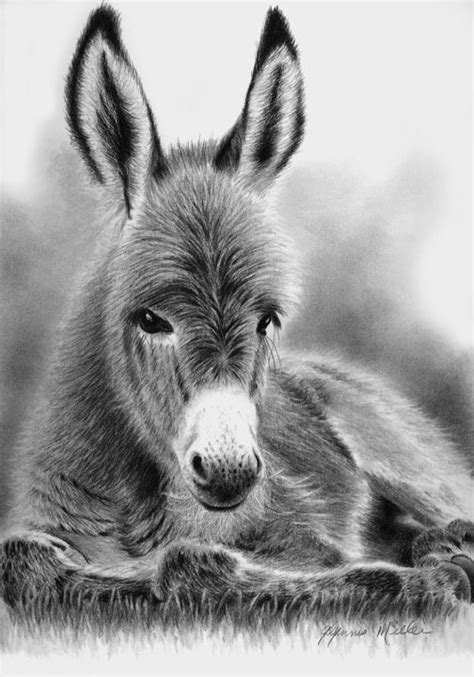 Buttercup by Glynnis Miller Pencil ~ 10 x 7   Animals