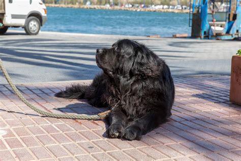 jacht und hund 2019 schwarzer hund an einer dicken leine yachthafen von