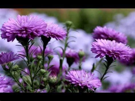 fiori colore viola fiori di colore viola