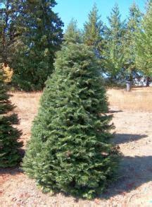 furlanic christmas trees