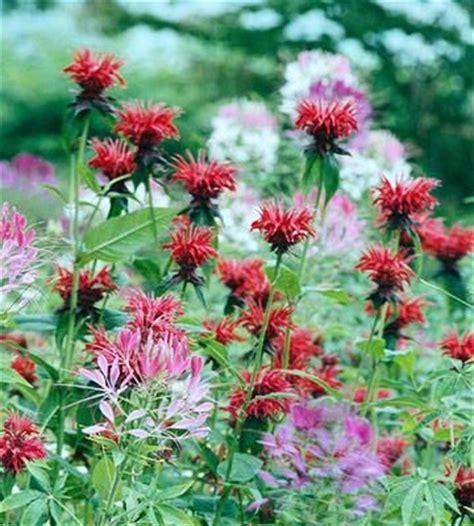 Hummingbird Garden Flowers Start A Hummingbird Garden