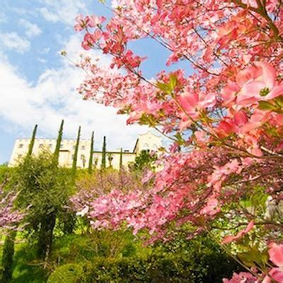 caccia al tesoro in giardino pasquetta con caccia al tesoro botanico nei grandi
